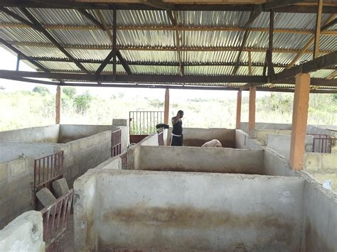 sle business plan on pig farming uncategorized pig farming and other business