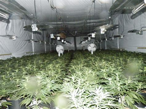 growers house growers house 28 images 18 milestones that led to our marijuana tipping point