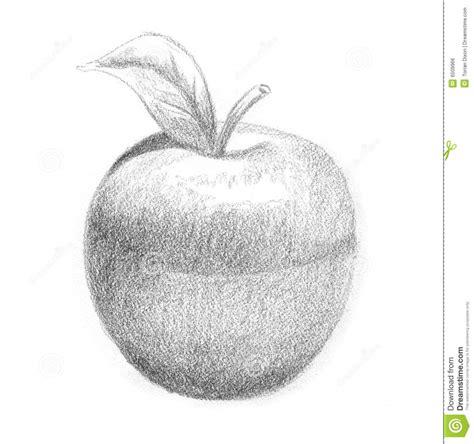 apple sketch royalty free stock image image 6509966