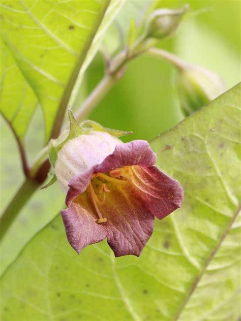 Garten Pflanzen Versand by Pflanzen Versand Kataloge Pflanzen Versand