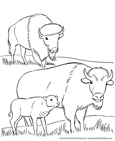 free coloring pages wildlife park coloring pages