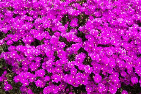 piccole aiuole fiorite aiuole fiorite come crearle perfette per tutte le stagioni