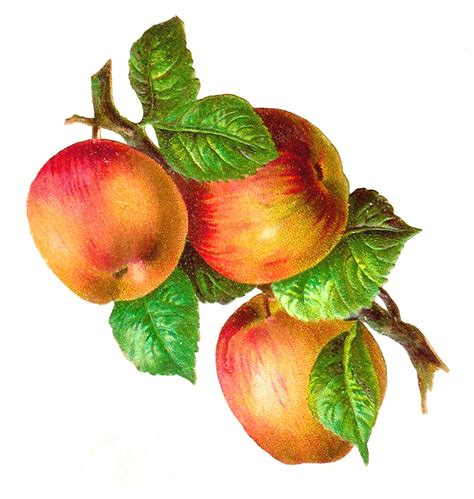 antique images free fruit clip art 3 gala apples on a
