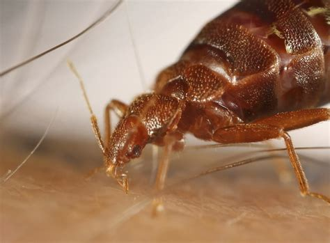 chicago bed bugs business news 16 jan 2014 15 minute news know the news