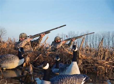 layout hunting shotgun tips how to shoot from a layout blind visit us