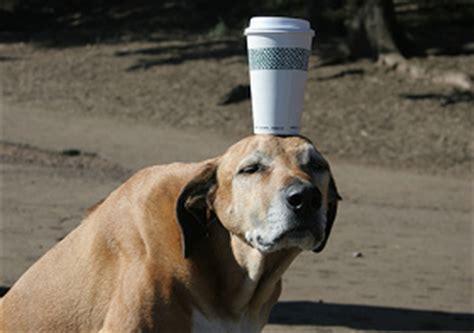 is coffee bad for dogs is coffee bad for dogs