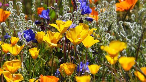 zoom virtual garden backgrounds desert botanical garden