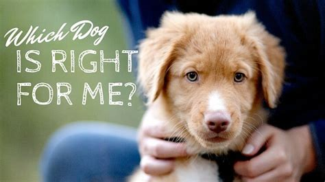best for me quiz which breed is right for me quiz puppy