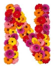 letter n flower alphabet isolated on white background
