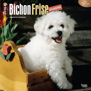 bichon frise desk calendars bichon frise puppies calendars 2018 on europosters