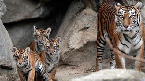 hewan  terancam punah   antaranya   indonesia