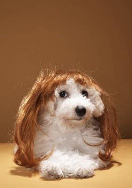 long     dogs hair  grow pets