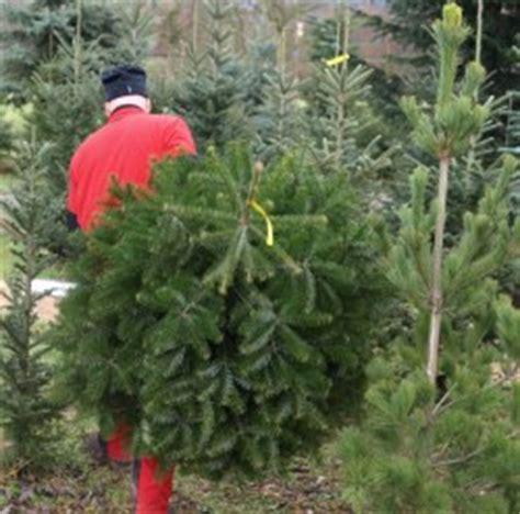 christbaum selber schlagen badisch weihnachtsbaum selber schlagen wurzburg frohe weihnachten in europa