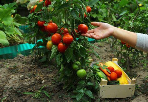 Garden Food by Food Is Replacing Esthetics In The Garden Toronto
