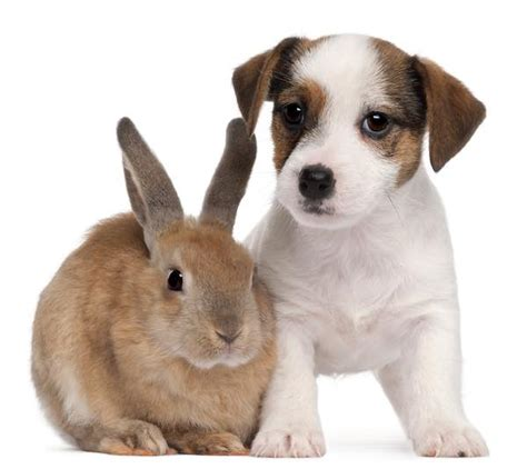 puppies and bunnies can rabbits and dogs live together happily and safely
