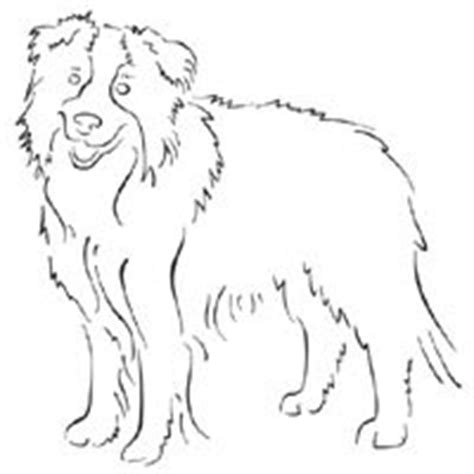 coloring page border collie standing border collie 187 coloring pages 187 surfnetkids