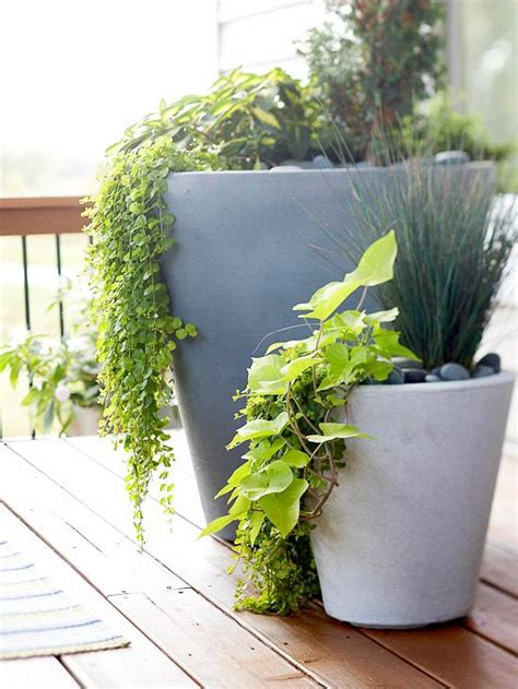 plants that drape tips for using planters in your yard sweet potato vines