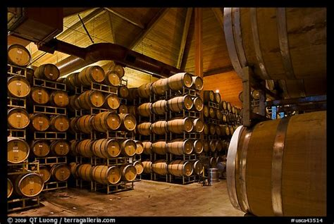 black bucks in a wine barrel room picture photo wine barrels in aging room napa valley california usa