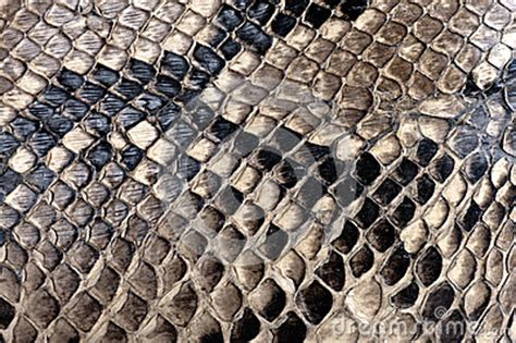 python texture stock images image