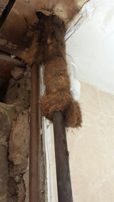 hot water pipe lagging asbestos diynot forums