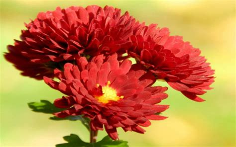 red flowers and their names red flowers names 9 wide wallpaper hdflowerwallpaper com