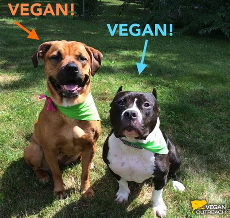vegan diet for dogs my is a 55lb pitbull and he s vegan