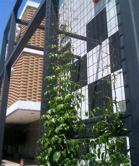 wallpaper daun merambat cara menanam tanaman dinding hot girls wallpaper