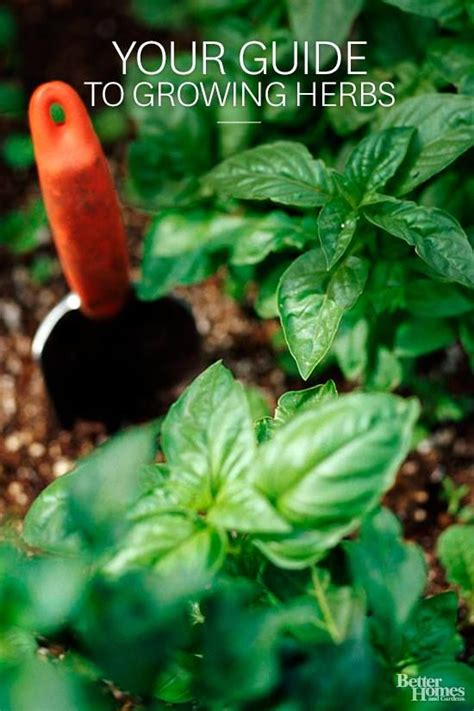 growing herbs 1000 images about the well designed garden on pinterest