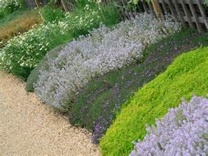 landscaping ground cover ideas how to landscape with groundcover diy