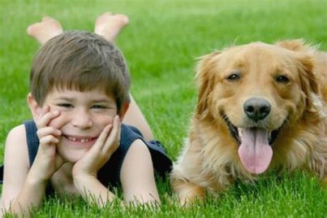 asthma in dogs associated house dust protects against respiratory infection linked to asthma