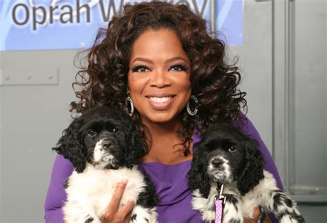 oprah s dogs oprah s new dogs and