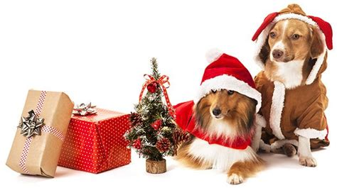 top 20 best selling christmas gifts for dogs and dog
