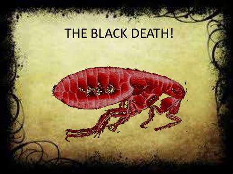 black death bossieraim black death