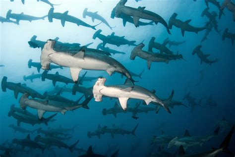 scuba diving in galapagos resorts packages caradonna