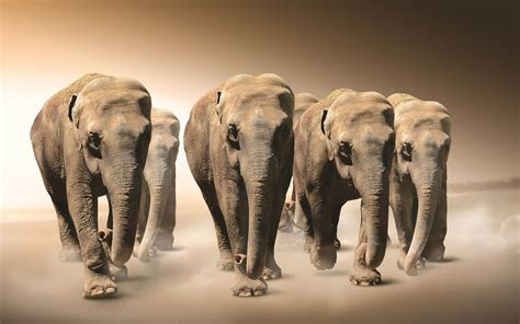 abstract elephant wallpaper hd hd elephants wallpapers and photos hd animals wallpapers