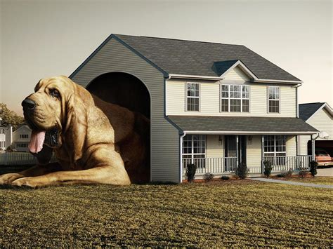 dog house digital wallpaper big dog in a small house digital art