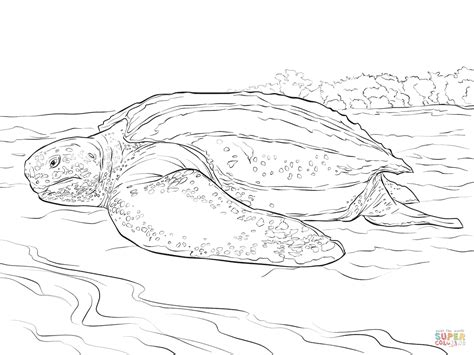 leatherback turtle coloring page realistic leatherback turtle coloring page free