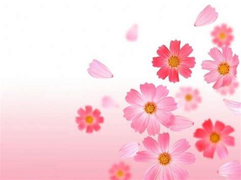 imagenes lindas fondos im 225 genes de flores para fondo de celular fondos de