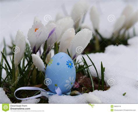 fiori di neve uova di pasqua pongono i fiori della neve fotografia