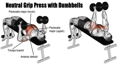 bench pressing with dumbbells triceps workout at home to have smart and strong arms