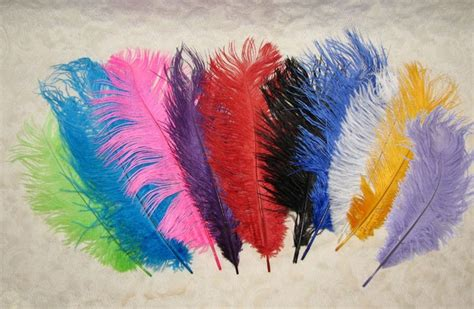 colored feathers pin colored feathers 3jpg on