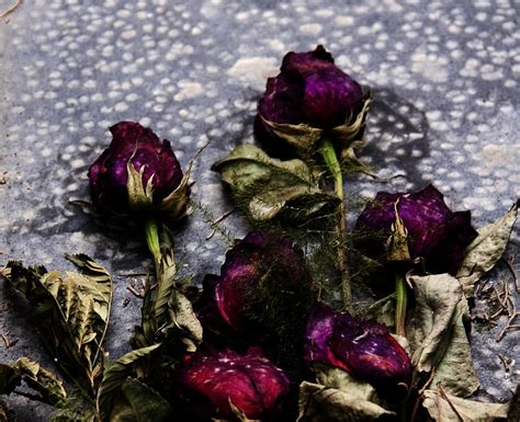 imagenes de flores marchitas flor marchita junglekey es imagen