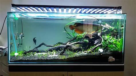 arwana aquascape aquarium youtube