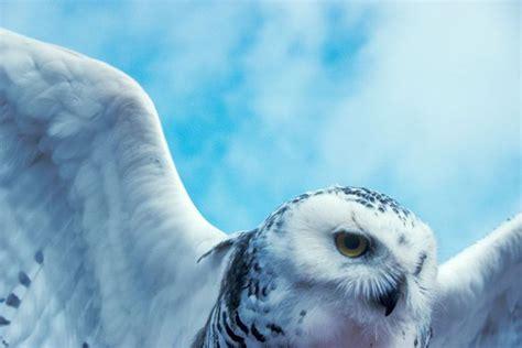 imagenes de animales naturales paisajes naturales y animales en su habitat im 225 genes