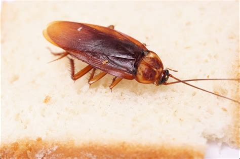 what temperature do bed bugs freeze all track exterminators pest and termite control