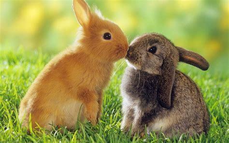 cute rabbit themes windows 8 theme cute rabbits windows 8 themes