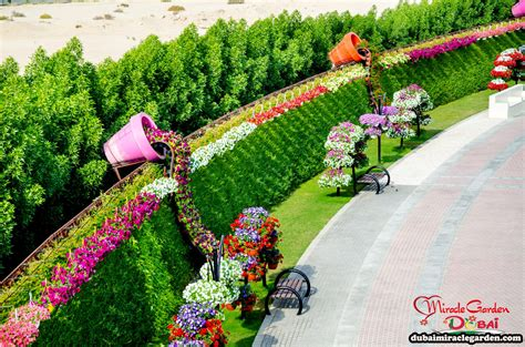 Dubai Flower Garden by Dubai Miracle Garden The World S Flower