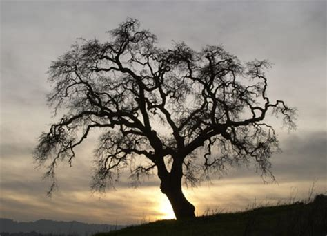 picture of a tree rsr the origin of trees kgov
