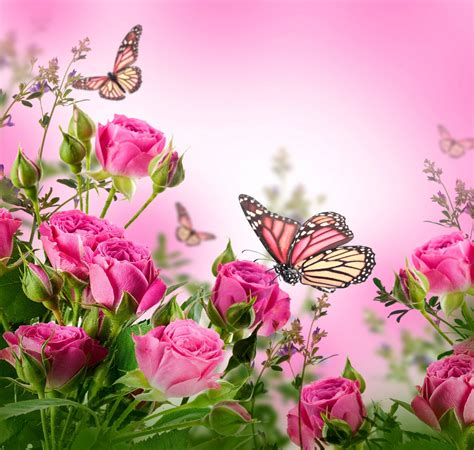 Butterfly And Beautiful Flowers Wallpapers Roses Flowers Pink Butterflies Blossom Beautiful Flower