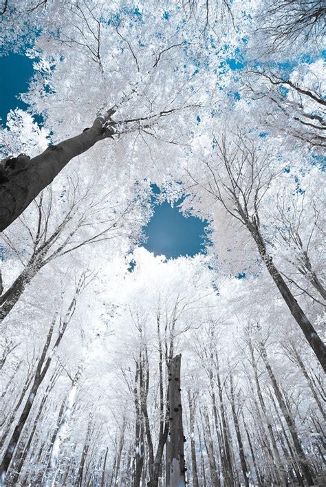 trees glowing  snow  ice favethingcom